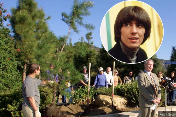 Harrison Memorial Tree Destroyed By Beatles